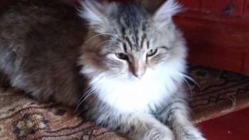 Пропал кот - 20161031_143043_HDR.jpg