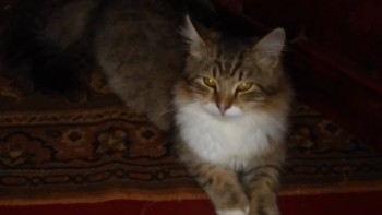 Пропал кот - 20161031_142956.jpg